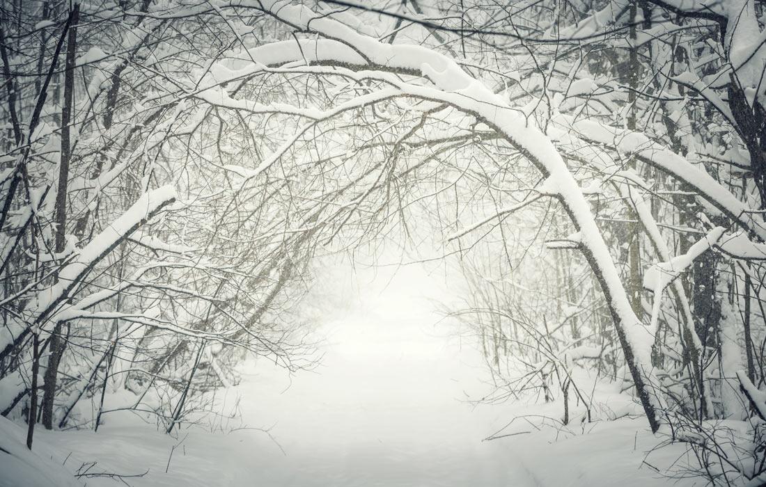 spiritual-journey-winter-woods
